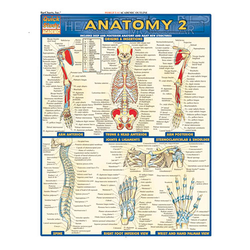 Image For Anatomy 2 by BarCharts Inc.