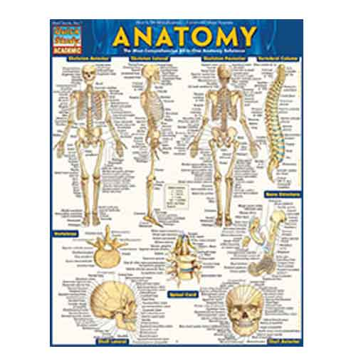 Image For Anatomy by BarCharts Inc.
